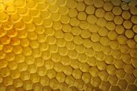 ミツバチの巣房 アップ