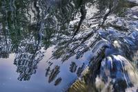滝に映る木々