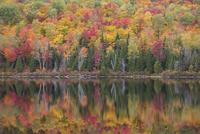 秋の湖岸 01543048310| 写真素材・ストックフォト・画像・イラスト素材|アマナイメージズ