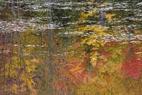 湖面に映る秋の木々