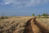 サバンナの泥道