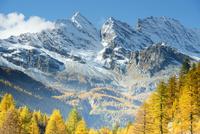 ヨーロッパカラマツの森と山 01543049300| 写真素材・ストックフォト・画像・イラスト素材|アマナイメージズ