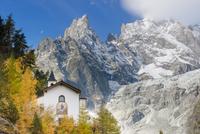 ヨーロッパカラマツの木々と山 01543049306| 写真素材・ストックフォト・画像・イラスト素材|アマナイメージズ
