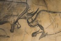 ショーヴェ洞窟壁画 01543049411| 写真素材・ストックフォト・画像・イラスト素材|アマナイメージズ