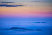 夜明けの霧とドイツトウヒの森 01543049412  写真素材・ストックフォト・画像・イラスト素材 アマナイメージズ