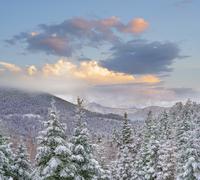 冬の針葉樹林 01543049662| 写真素材・ストックフォト・画像・イラスト素材|アマナイメージズ