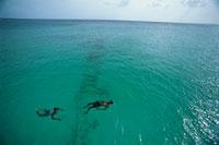 カリブ海で泳ぐ2人の人物 バルバドス 01569000440| 写真素材・ストックフォト・画像・イラスト素材|アマナイメージズ
