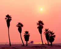 ベニスビーチの夕陽 01570090083  写真素材・ストックフォト・画像・イラスト素材 アマナイメージズ