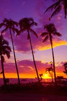 ヤシの木のシルエットと夕日の沈む水平線 コナ ハワイ島