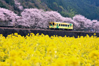 菜の花と錦川鉄道