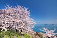 桜咲く紫雲出山より瀬戸内海