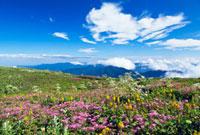 シモツケソウ咲く伊吹山 01597015670| 写真素材・ストックフォト・画像・イラスト素材|アマナイメージズ
