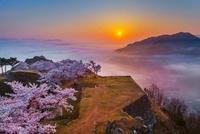 桜咲く竹田城跡と日の出