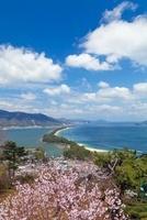 桜咲く天橋立 01597018997| 写真素材・ストックフォト・画像・イラスト素材|アマナイメージズ