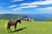 馬と国賀海岸