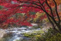 紅葉の奥津渓 01597025829| 写真素材・ストックフォト・画像・イラスト素材|アマナイメージズ
