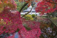 秋の久安寺