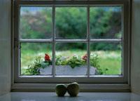 窓辺に置かれた2個のりんごと花