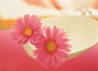 白い器に入った花(ガーベラ)