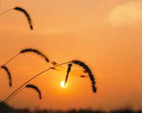 夕日と赤トンボ(オレンジ)