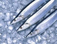 氷の上の3匹の秋刀魚 01651018670| 写真素材・ストックフォト・画像・イラスト素材|アマナイメージズ