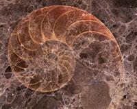 石と化石イメージ