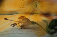 花とアルファベット文字のフォトコラージュ
