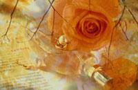香水瓶とバラの花の合成 01671001312| 写真素材・ストックフォト・画像・イラスト素材|アマナイメージズ