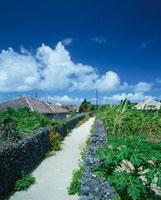 白い道と町並   竹富島 沖縄県 01673003145| 写真素材・ストックフォト・画像・イラスト素材|アマナイメージズ