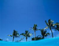 半水面と椰子の木  沖縄県 01673004318| 写真素材・ストックフォト・画像・イラスト素材|アマナイメージズ