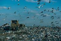 ゴミ捨て場   アメリカ