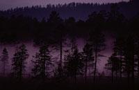 森と霧 フィンランド