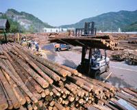 木材共販所