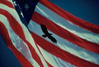 鳥のシルエットと星条旗 アメリカ