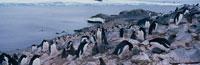 海沿いに集まるペンギンの群れ 南極