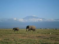 アフリカ象とキリマンジャロ アンボセリ ケニア