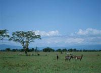 ナクル湖国立公園の動物達  ケニア