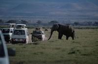 草原を歩く象とサファリカー アンボセリ ケニア