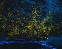 ホタルの飛ぶ夜景   南海部郡本匠村 大分県