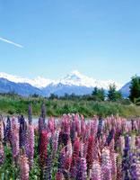 マウントクック主峰とサザンアルプス ニュージーランド