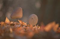 石の鳥 01759000010| 写真素材・ストックフォト・画像・イラスト素材|アマナイメージズ