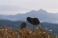 石の鳥 01759000012| 写真素材・ストックフォト・画像・イラスト素材|アマナイメージズ
