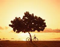 暮色と自転車     ワイキキ  ハワイ