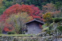紅葉と小屋