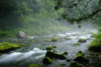 霧の円原川