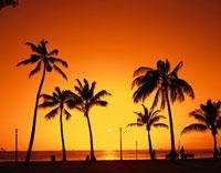 カピオラニ公園のヤシの木と夕日   ハワイ