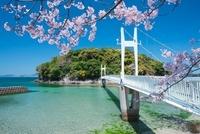 桜と湯の児島と観月橋 01801012476| 写真素材・ストックフォト・画像・イラスト素材|アマナイメージズ