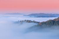備中松山城の雲海 01801016538| 写真素材・ストックフォト・画像・イラスト素材|アマナイメージズ