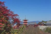 秋の清水寺 01801018978| 写真素材・ストックフォト・画像・イラスト素材|アマナイメージズ