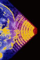 胎児の超音波スキャン 01809004205| 写真素材・ストックフォト・画像・イラスト素材|アマナイメージズ